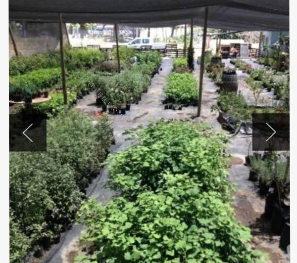 Vendo vivero 2016 11 04 economicos de el mercurio for Vendo plantas ornamentales