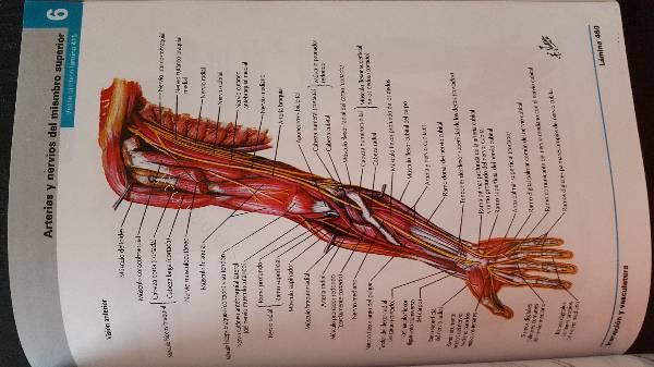Atlas De Anatomía Humana + Cd (Netter, 6 Edición) 2016-04-18 en ...