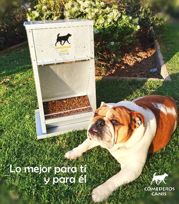Comederos para perros comederos canis 2016 08 16 for Comederos para perros